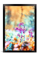 Bluebell Twist, Framed Print