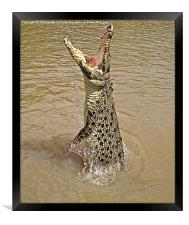 Queensland Wild Crocodile., Framed Print