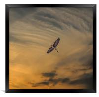 Heron southbound, Framed Print