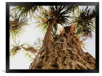 Kitty in a palm tree, Framed Print