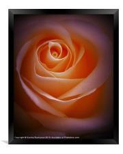 Simply Rose, Framed Print