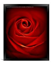 Dreamy Red Rose, Framed Print