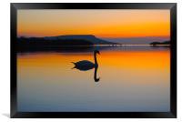 Swan Beauty, Framed Print