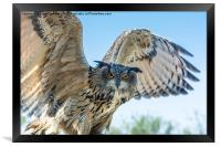 Eastern Siberian Eagle Owl, Framed Print