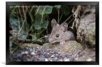 mouse, Framed Print