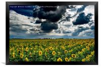 yellow field, Framed Print