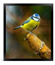 Soldier Blue, Framed Print