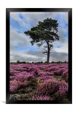 Alone In The Heather, Framed Print