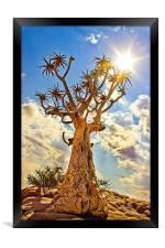 Quiver Tree, Framed Print