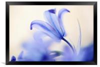 Blue Light. The Wild Hyacinth, Framed Print
