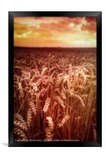 Reap What You Sow, Framed Print