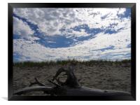 Cape Cod, Massachusetts Driftwood, Framed Print
