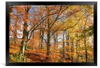 Autumn Colour in Derbyshire, Framed Print