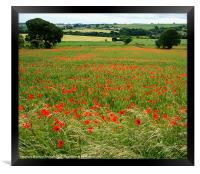 Country Summer Meadow, Framed Print
