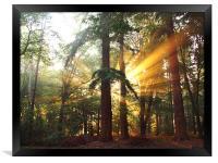 New Forest Dawn, Framed Print