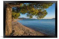 The Pine Walk, Puerto Pollensa, Framed Print