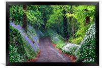 Bluebell Woods , Framed Print