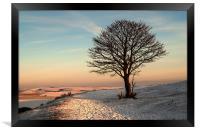 The Nowhere Tree, Framed Print