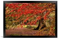 Autumn Leaves, Framed Print