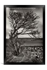 Windswept Winter Tree, Framed Print