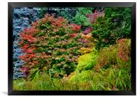 Autumn Colours at Thorp Perrow, Framed Print