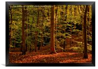 Autumn Woodland Evening, Framed Print
