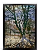 Winter Trees, Framed Print