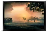 Deers In The Mist, Framed Print