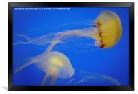 Ethereal Jellyfish, Framed Print