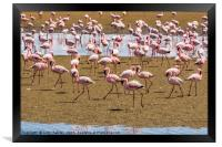 A Flamboyance of Flamingos, Framed Print