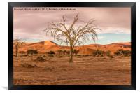 Sossusvlie Tree at Dawn, Namibia, Framed Print