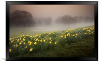 Misty Daffodils, Framed Print