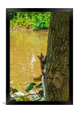 A Cute squirrel pops out from behind a tree!, Framed Print