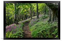 Path through Flowers, Framed Print