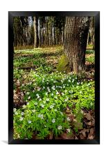 Spring Flowers, Framed Print