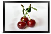 three sour cherries, Framed Print