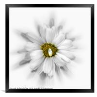 bloom in shades of white, Framed Print