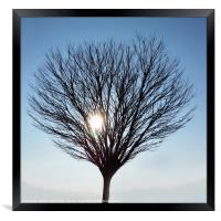 winter sun, Framed Print