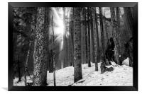Woods on a Winter's Day bw, Framed Print