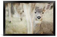 Keeping a Low Profile, Framed Print