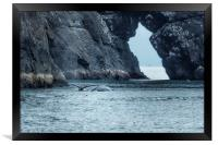 Two Humpback Whales in Resurrection Bay, Framed Print