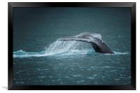 Whale Tail, Framed Print