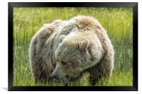 Mama Brown Bear, No. 1, Framed Print