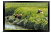 Two Brown Bear Cubs in a Meadow of Variegated Gree, Framed Print