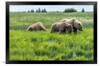 A Mother and Her Two Cubs, No. 2, Framed Print