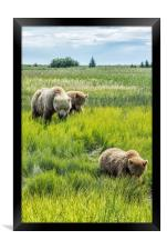 A Mother and Her Two Cubs, No. 3, Framed Print