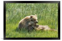 I Got Your Back - Bear Cubs, No. 4, Framed Print