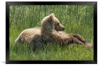 Settling Down Again - Bear Cubs, No. 6, Framed Print