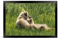 Best Friends Fur Ever - Bear Cubs, No. 8, Framed Print