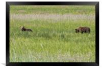 Young Brown Bear Cubs, Framed Print